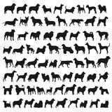 Popular dog breeds stock illustration