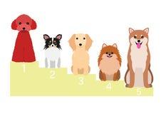 Popular dogs in Japan vector illustration