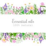 Popular essential oil plants label set. badge with text. Peppermint, lavender, sage, melissa, Rose, Geranium, Chamomile, Stock Photos