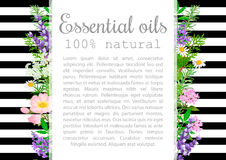 Popular essential oil plants label set. badge with text. Royalty Free Stock Photo