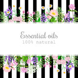 Popular essential oil plants label set on black stripes Stock Image