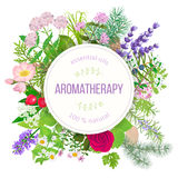 Popular essential oil plants label set. round badge with text aromatherapy Royalty Free Stock Photos