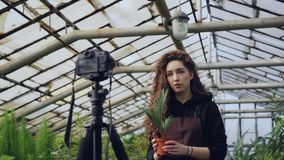 Popular female blogger experienced gardener is recording video about gardening for her vlog standing in greenhouse and. Holding pot flowers. Young people and stock video footage