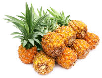 Popular honey queen pineapple Royalty Free Stock Images