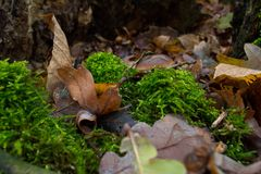 Popular mushroom species - EU royalty free stock photo
