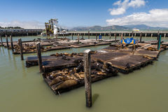 Popular Pier 39 for seal viewing Stock Photos