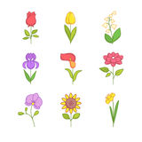 Popular wedding flowers blossoming. Thin line icons set. Modern flat style symbols isolated on white for infographics or web use Stock Photos