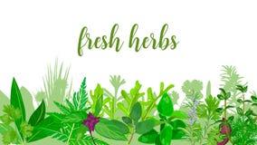 Popularni Realistyczni ziele i kwiaty z tekstem ustawiającym w zielonego koloru miętówce, lawenda, mędrzec, Zdjęcia Stock