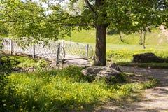 Populier dichtbij de brug over de rivier in de zomer Stock Foto's