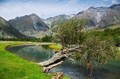 Populier, turkooise rivier en bergen Royalty-vrije Stock Afbeeldingen