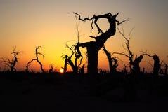 Populus dans le désert Photos libres de droits