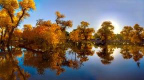 Populus euphratica con la riflessione fotografia stock