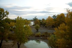 Populus euphratica forest. Is located in Wucaitan, Xinjiang, China Stock Photo
