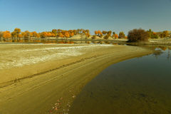 The populus euphratica forest near the river. The populus euphratica forest near the Tarim River Stock Photo