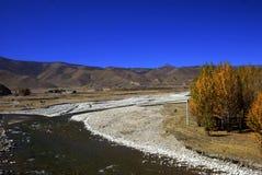 Populus, rio e montanha no Qinghai-Tibetano Foto de Stock Royalty Free