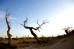 Populus tot in der Wüste. lizenzfreie stockfotografie
