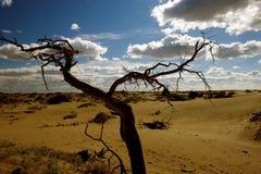 Populus tot in der Wüste. lizenzfreies stockfoto