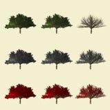 Populusboom het 3d teruggeven voor landschapsontwerper geïsoleerd Royalty-vrije Stock Fotografie