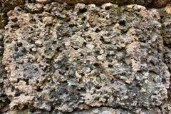 Porös abstrakt textur av stenyttersida Royaltyfria Bilder