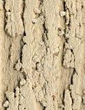 porös bakgrundsdesignmålarfärg Arkivbild