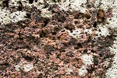 Porös stenbakgrund 01 Arkivfoton