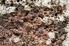 Poröser Steinhintergrund 01 stockfotos