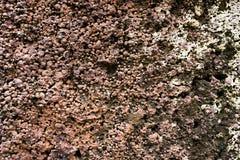 Poröser Steinhintergrund 02 Stockfoto