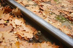 Poręcz w jesień lesie obrazy royalty free