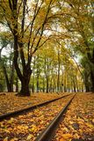 Poręcze w miasto parku z drzewami i spadać żółtym jesień urlopem zdjęcia stock