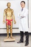 Por completo del modelo de Acupoint del doctor de la medicina china y del cuerpo humano imágenes de archivo libres de regalías