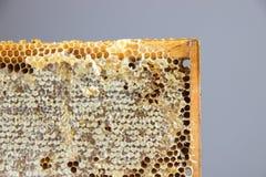Por completo del panal sano delicioso fresco de la miel en un fram de madera Foto de archivo libre de regalías
