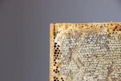 Por completo del panal sano delicioso fresco de la miel en un fram de madera Fotografía de archivo libre de regalías
