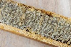 Por completo del panal sano delicioso fresco de la miel en un fram de madera Imágenes de archivo libres de regalías