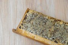 Por completo del panal sano delicioso fresco de la miel en un fram de madera Fotos de archivo libres de regalías