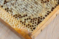 Por completo del panal sano delicioso fresco de la miel en un fram de madera Imagenes de archivo