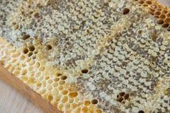 Por completo del panal sano delicioso fresco de la miel en un fram de madera Fotos de archivo