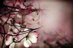 Por debajo el árbol de la magnolia imágenes de archivo libres de regalías