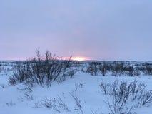 Por do sol ártico da tundra imagem de stock royalty free