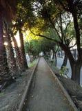 Por do sol, árvores e calmo Imagem de Stock