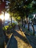 Por do sol, árvores e calmo Fotografia de Stock