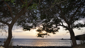 Por do sol, árvores, oceano, raios da luz do sol, crepúsculo, frente marítima Fotografia de Stock
