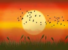 Por do sol Ilustração do Vetor