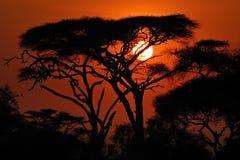 Por do sol africano Imagens de Stock