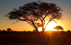 Por do sol africano Fotografia de Stock Royalty Free
