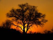 Por do sol africano Fotos de Stock
