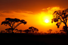 Por do sol africano Foto de Stock Royalty Free