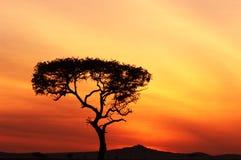 Por do sol africano Imagens de Stock Royalty Free