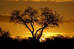 Por do sol africano Imagem de Stock