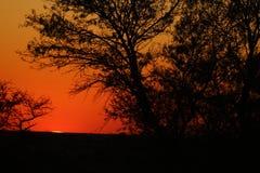 Por do sol africano alaranjado Imagem de Stock