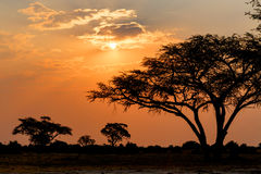 Por do sol africano com a árvore na parte dianteira foto de stock